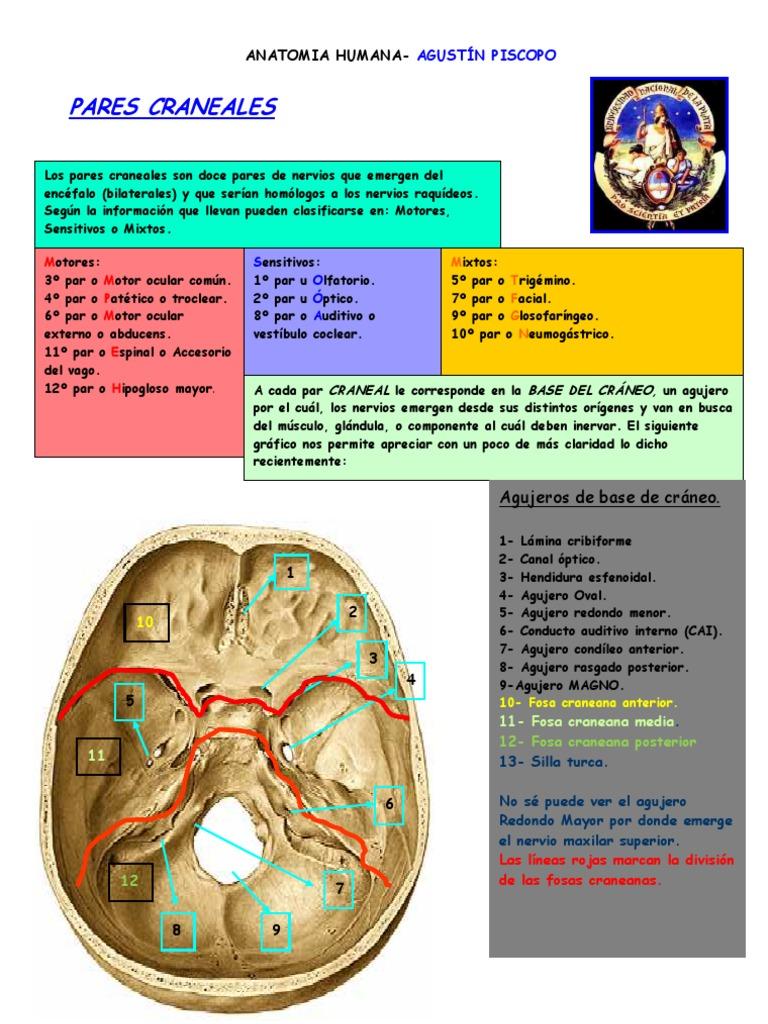 Hermosa Qué Es Un Agujero En La Anatomía Componente - Anatomía de ...