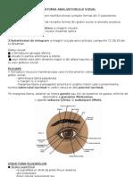 Imagini Anatomia-Analizatorului-Vizual
