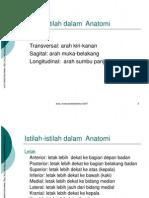 anatomimuskuloskeletal(1)vbvb