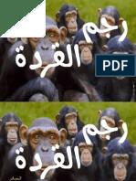 رجم القردة في الإسلام