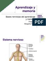 Aprendizaje y memoria, bases biológicas