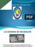 LA CÁMARA DE NEUBAUER