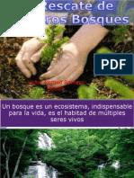 Al Rescate de Nuestros Bosques