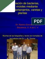 9. Diseminación de bacterias, virus y viroides mediante semill2 (1)