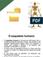 o-esqueleto-humano-1200665176991285-3(1)