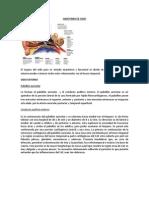 Anatomia de Oido 1