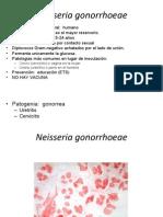 Neisseria-moraxela