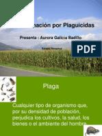 Contaminacin Por Plaguicidas y Clasificacion Quimica