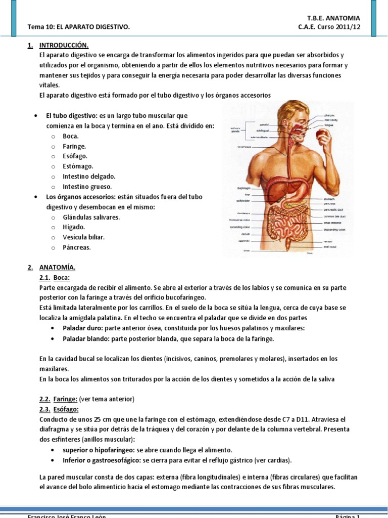 Ana Tema+10 Aparato+Digestivo