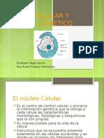 nucleocelularymaterialgenetico-110327142335-phpapp02