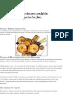 Proceso descomposición y putrefacción