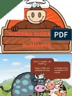 Diapositivas de Alimentacion