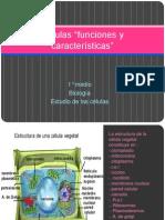Células funciones y características para compañeros