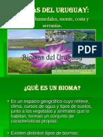 biomasdeluruguay