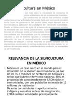 Silvicultura en México y San Luis Potosí