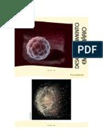 86960255-embriogenese
