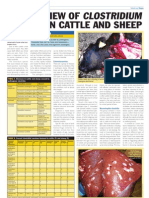 An Overview of Clostridium Species in Cattle and Sheep