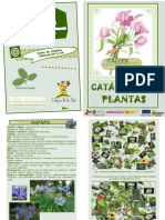 Catalogo Plantas