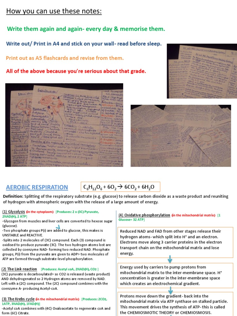 Edexcel A2 Biology Unit 5 Revision Cards [Autosaved] | Retina | Heart