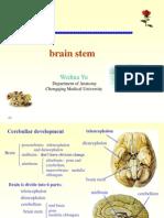 13396341 Brain Stem Internal