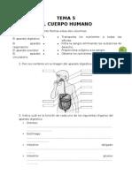 Ejercicios-El Cuerpo Humano