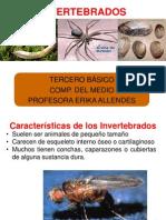 ANIMALES CLASIFICACION - INVERTEBRADOS-CDELMEDIO-3º BÁSICO