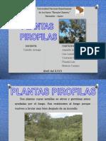 plantas pirofilas