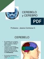 Cerebro Cerebelo