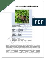 Planta Medicinal Zarzamora