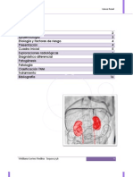cancer renal.docx