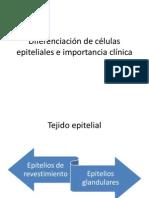 Diferenciación de células epiteliales e importancia clínica