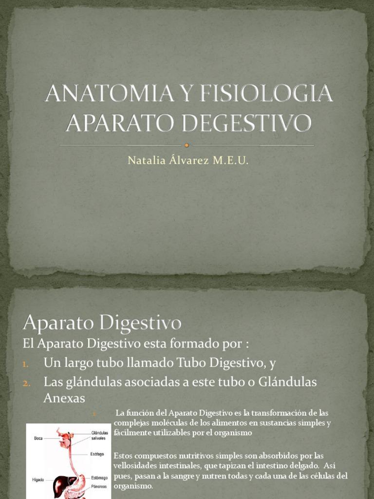 Anatomia y Fisiologia Aparato Degestivo