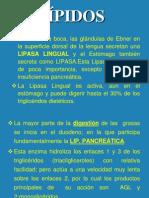 2  DIGESTIÓN DE LÍPIDOS