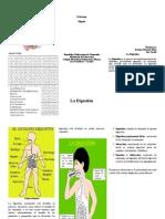 triptico del sistema digestivo.doc