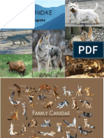 Family Canidae