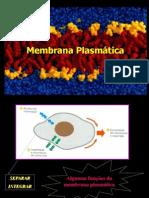 membrana_plasmatica