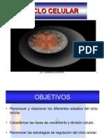 Ciclo celular USB.pptx