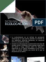 1. Ecolocación