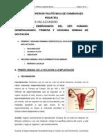 desarrollo_embrion.docx