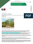 Pelo fim das verrugas — CH.pdf