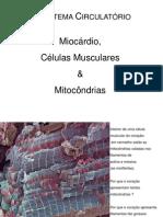 Sistema imune 2011