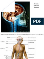 Sistema nervoso 2011 PP