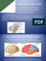Diapositivas Bloques Funcionales de Luria Reales