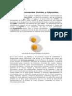Proteinas y Aminoacidos