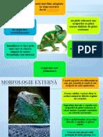 Clasa Reptile