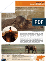 Facts about Asian Elephants