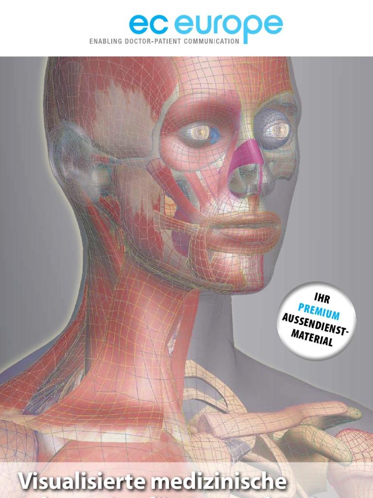 Wunderbar Bewertung Blatt 13 Neuron Anatomie Und Physiologie Fotos ...