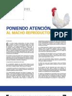 5 Poniendo atención al Macho Reproductor.pdf