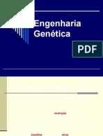 11 Engenharia Genética