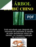 3Mensaje - Bambú chino